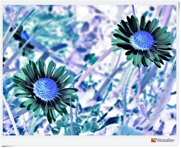 BlueTone Flowers by PentaxBro