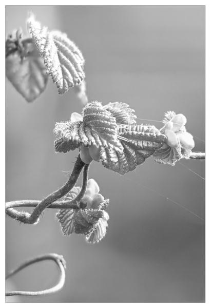 Twisty tree by suemart