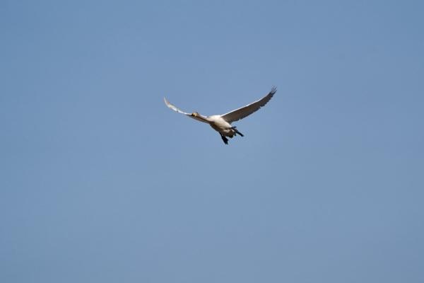 Flight... by LotaLota