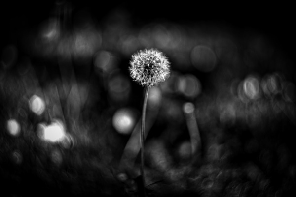 Blowball by icipix