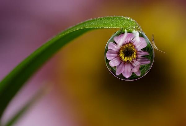 Dew Drop Refraction. by MacroAli