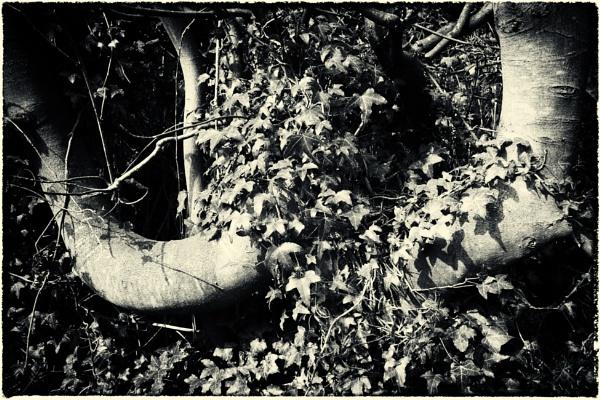 Taken in Isolation 5 by woolybill1