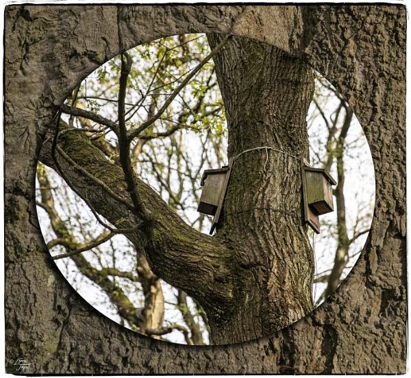 Arboreal Ambling by LynneJoyce