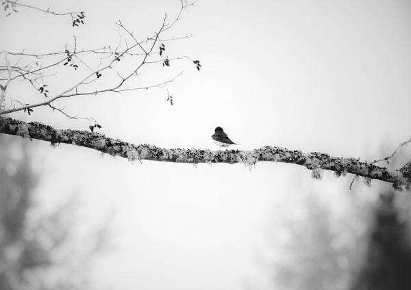 All Alone Am I by Daisymaye