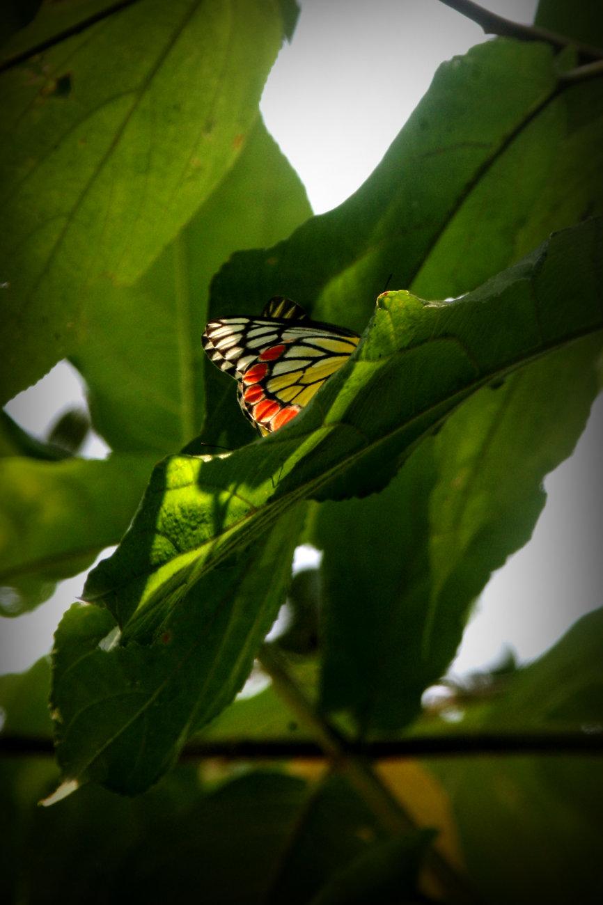 A Hidden Butterfly !!