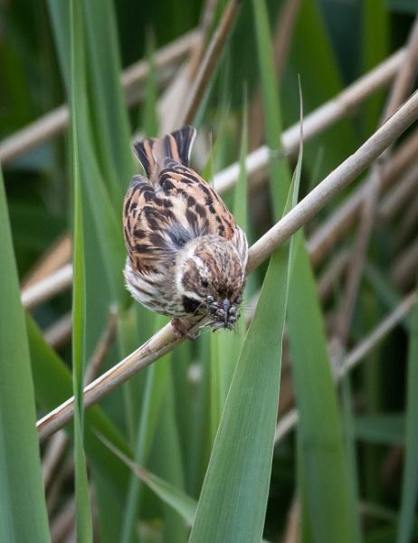Returning to the Nest by jasonrwl