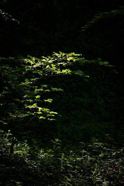A pocket of light by Arvorphoto