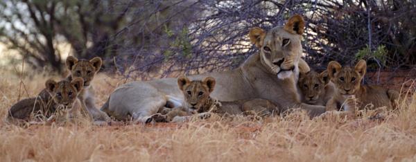 Mum and the kids by joeblade