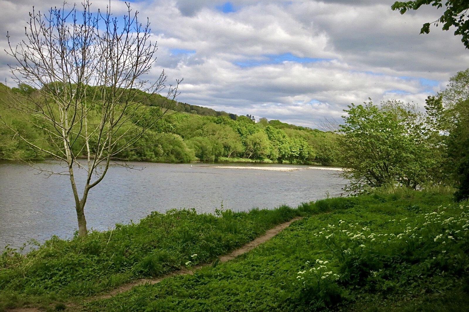 The river Tyne. hexham