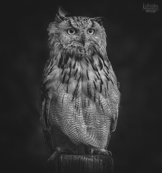 The Eagle Owl by MartinWait