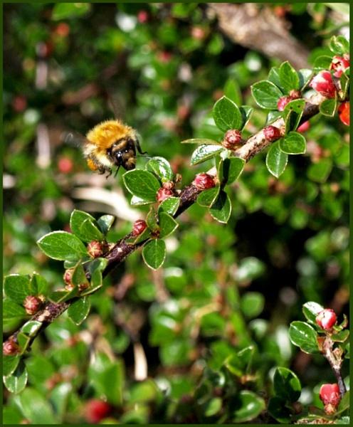 Bumble Bee by JuBarney