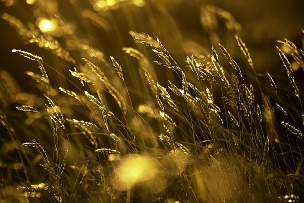 Sunlit grass by happysnapper