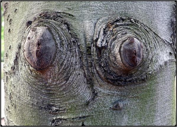 girlie-tree by FabioKeiner