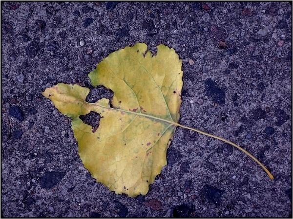 yellow leaf on blue by FabioKeiner