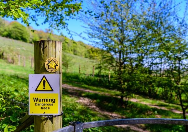 dangerous tree ?? by mogobiker