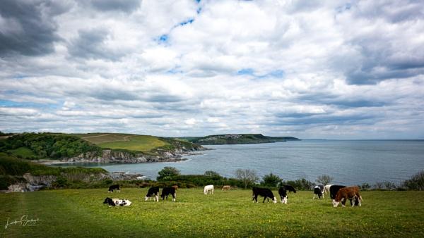 Cornish coast from Gribbin Head by LLCJ