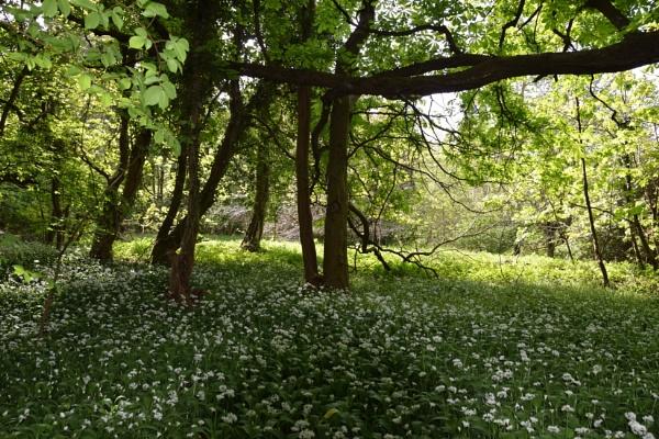 Walk in the woods by davyskid