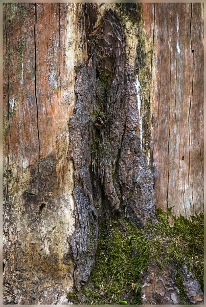 Tree Trunk Textures by AlfieK