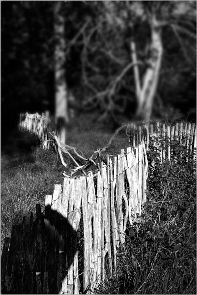 Fencing by AlfieK
