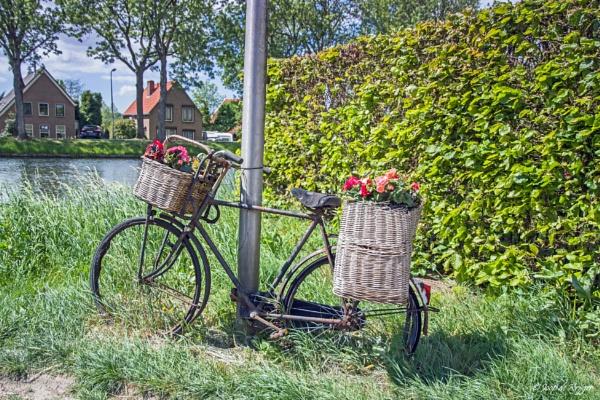 Flower Bike by joop_