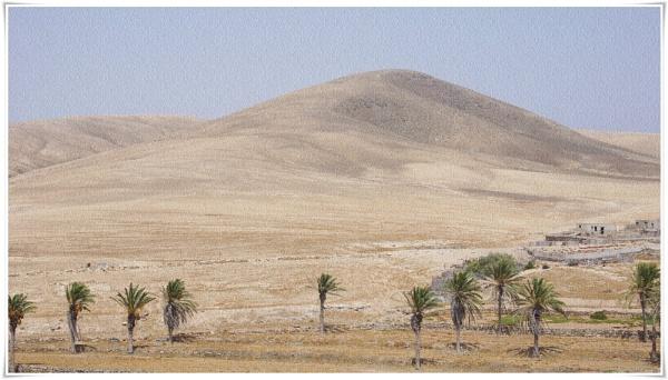 Desert Garden by PentaxBro