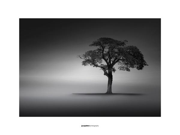 Solitude by jpappleton