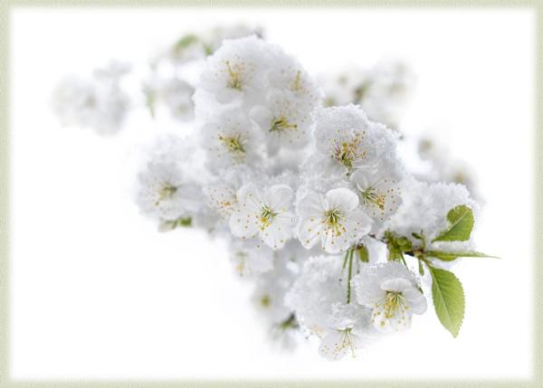 Mischievous spring by grulis