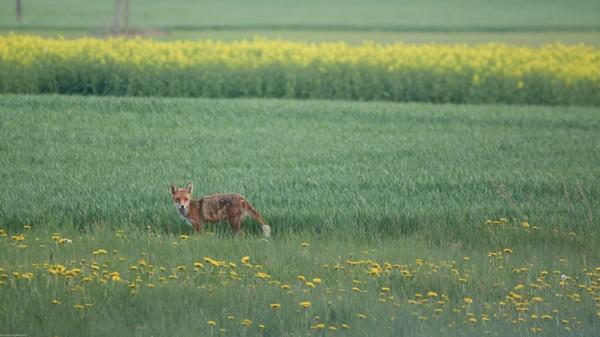 In farm fields... by LotaLota