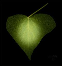 Love, life leaf,