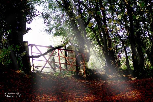 Woodland Gate by Jmag60