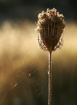 Kos Web
