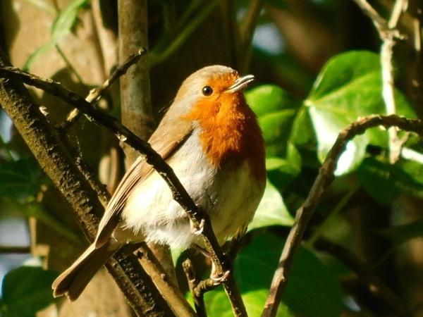Robin by Zoek
