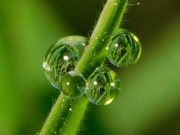 Dewdrop cluster by Zoek