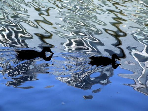 Doodle Ducks by pamelajean