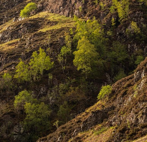 Green hillside by rontear