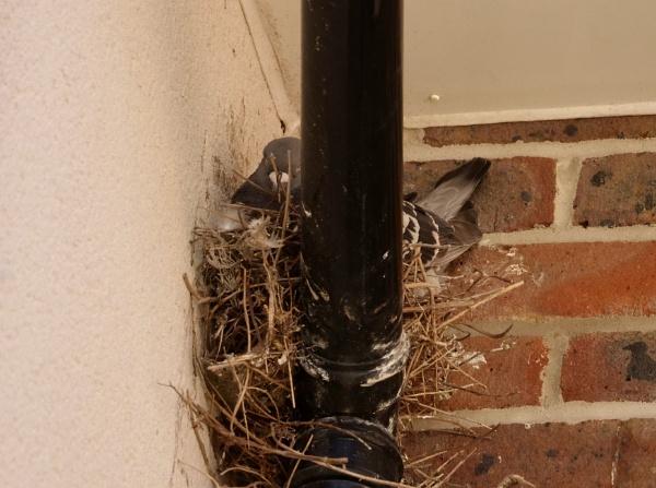 bird brain by sparrowhawk
