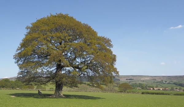 Lone tree Raisdale by cosmicnode
