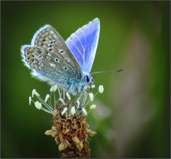 Feeling a little blue by PhilT2