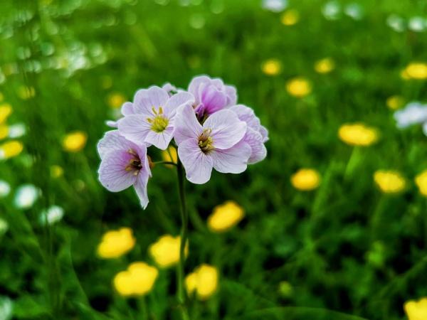 Wild flower by wisk