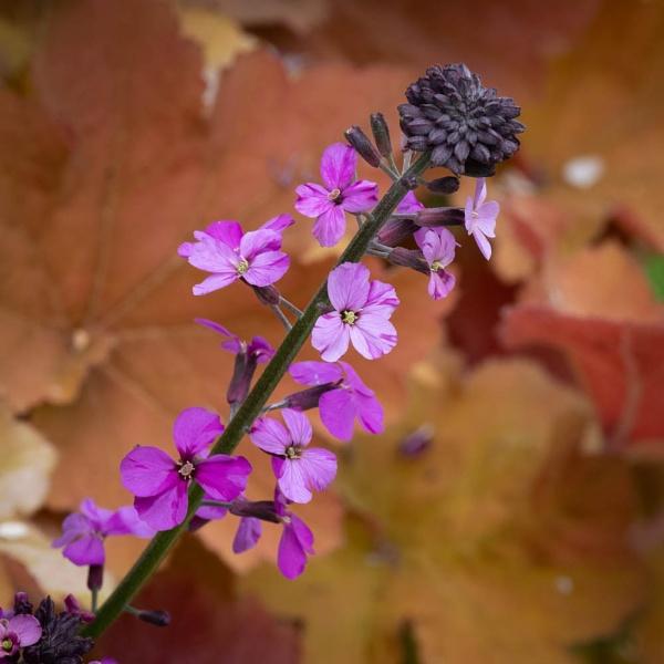 The Colour Purple by RolandC