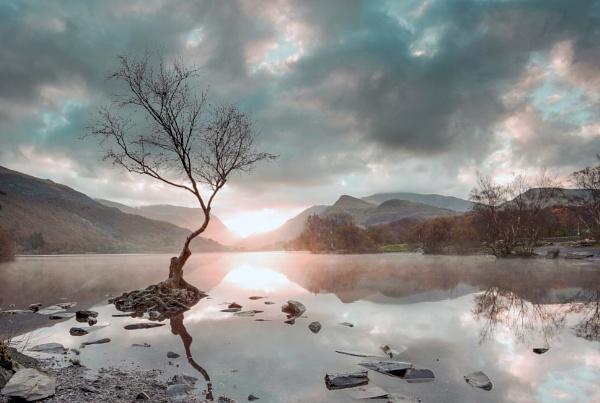 lone tree by KONIN
