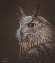 Eagle Owl by MartinWait