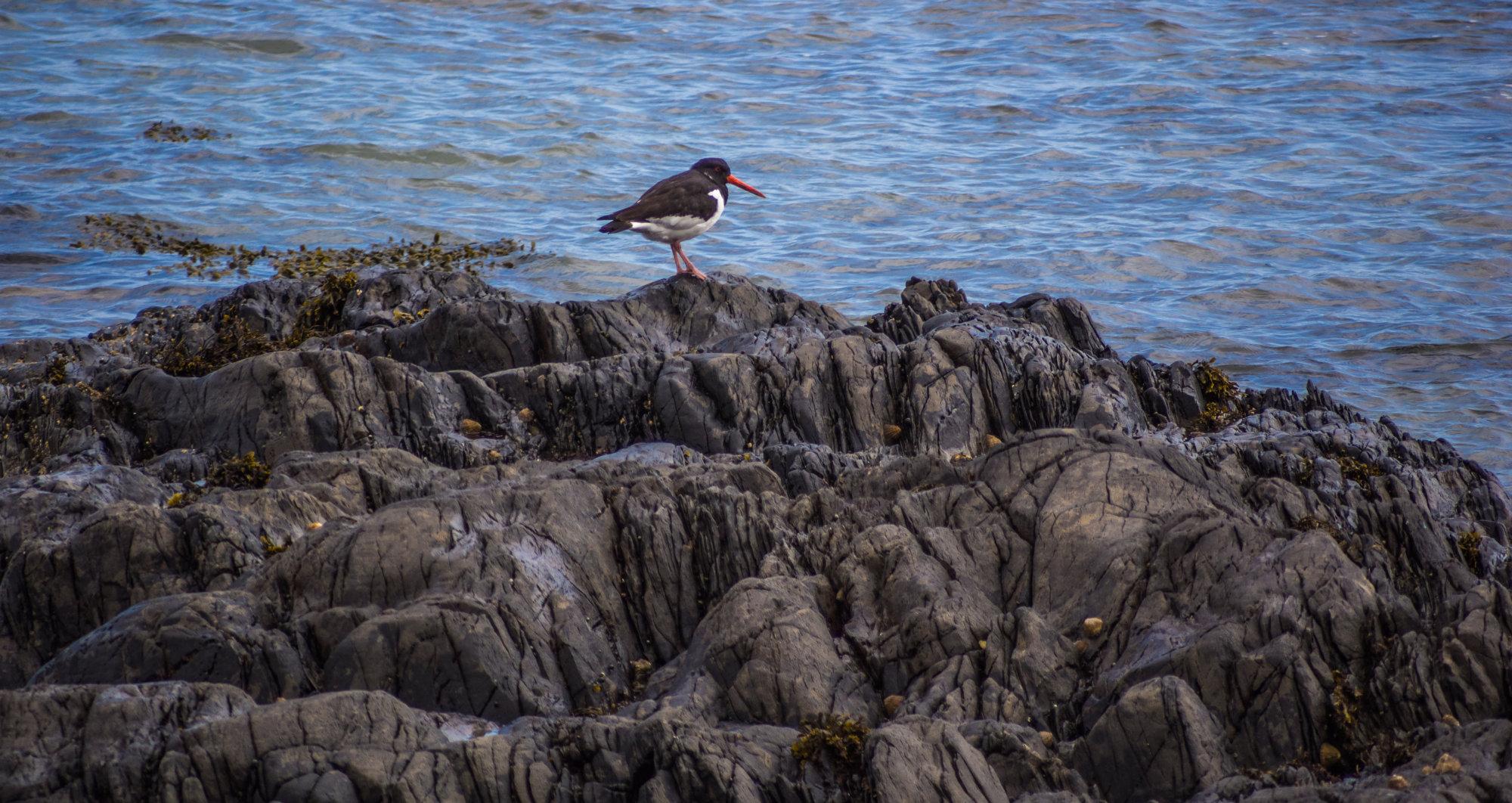 Bird on Rock 2