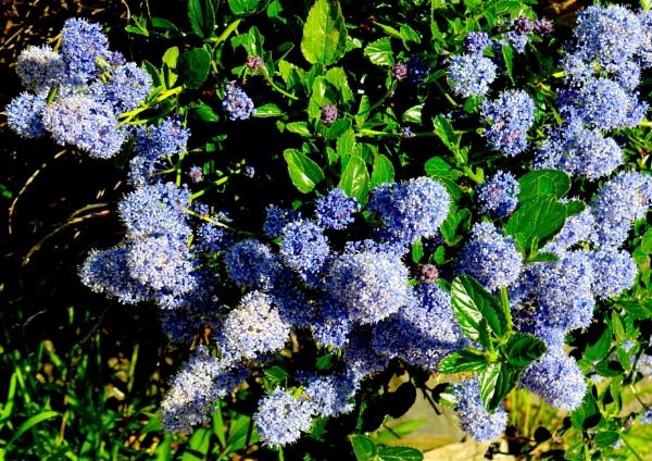 Bloo Bloomers 2 by ddolfelin