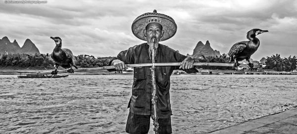 Smoking Fisherman with Cormorants, River Li, Guilin, China by brian17302