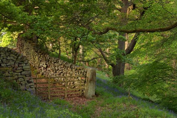 Woodland Scene by Trevhas