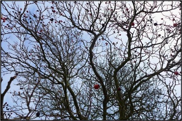 bare berry-tree by FabioKeiner