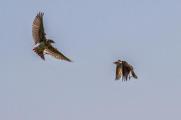 Skylarking by Lencollard