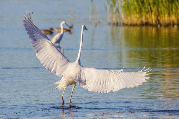 Dancing on water by Lencollard