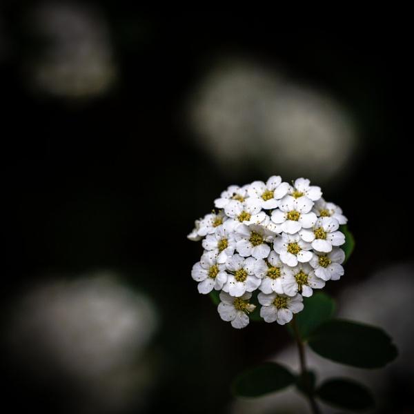 Petal of blooming plant in spring